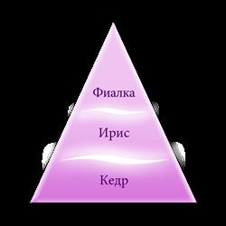 Пирамида ароматов Принцесса Шифон